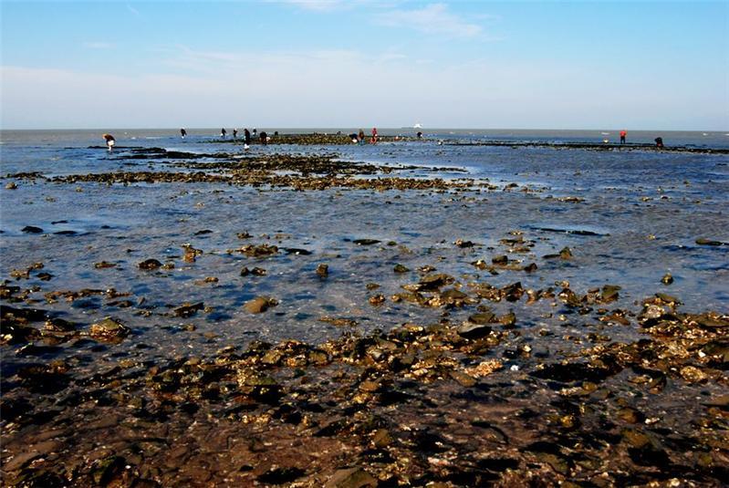 信息中心 故乡的海边   夸家乡的海边我的家乡在苍南海边的一个小镇
