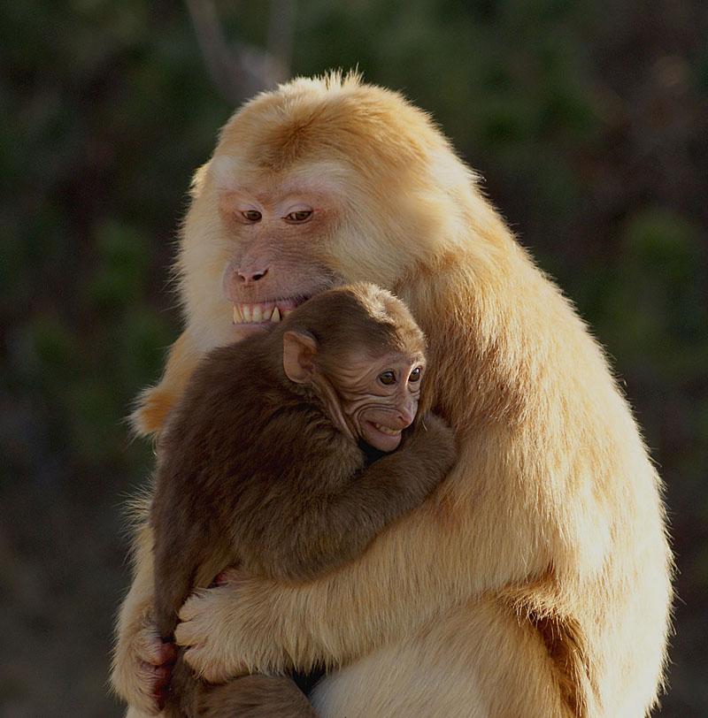 动物父子唯美图片