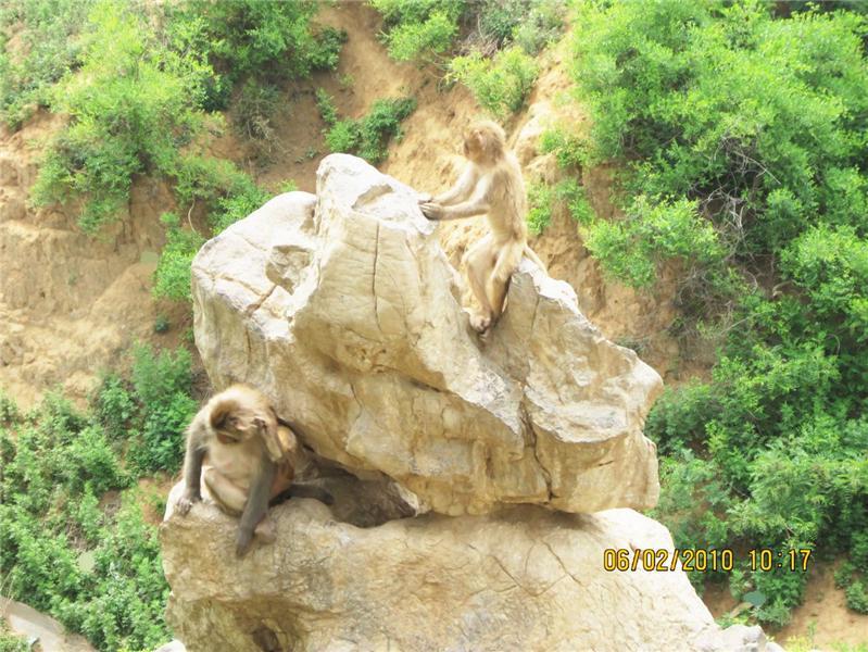 摄于青州王府游乐园中的动物