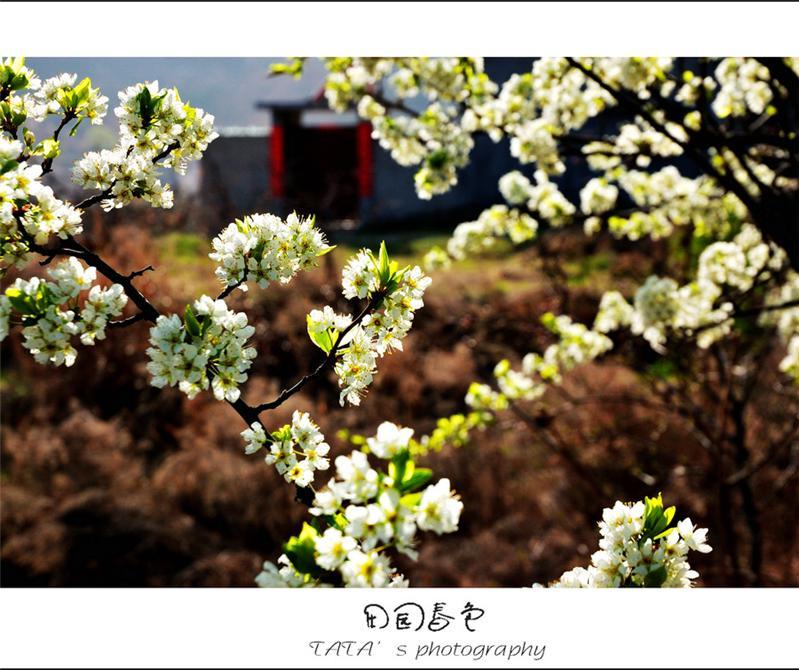 田园春色2