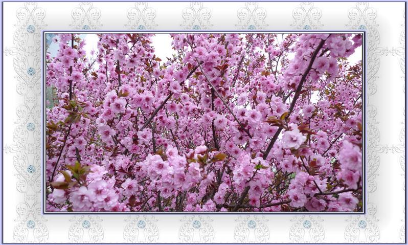 """花境-""""孔子故乡 中国山东""""国际网络摄影大赛官方网站"""