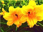《姊妹花》