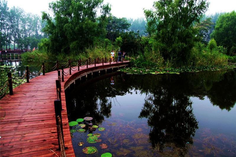 湿地上的《木桥》