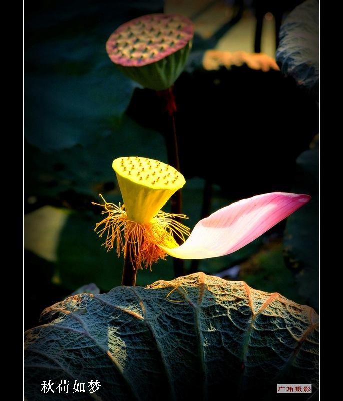 《渔家傲·相思瘦》 - 酒仙 - 酒仙的博客