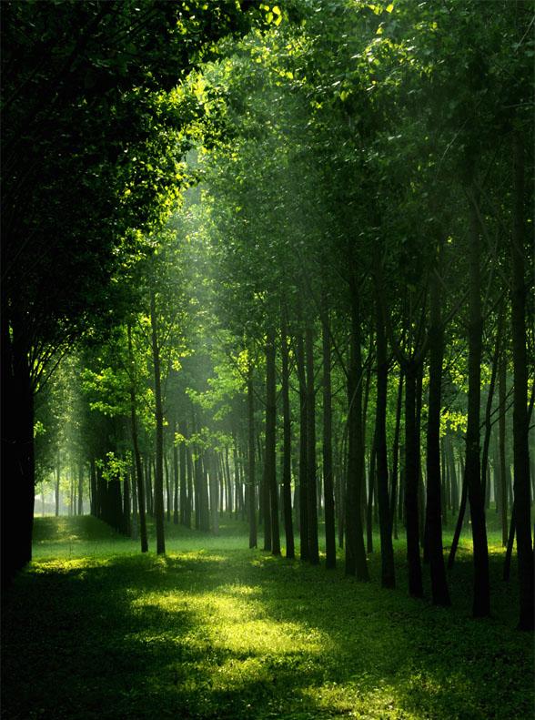 壁纸 风景 森林 植物 桌面 588_791 竖版 竖屏 手机