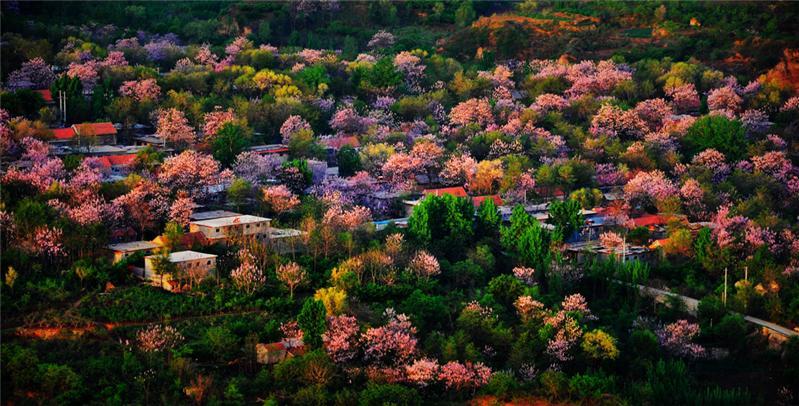 鮮花盛開的故鄉