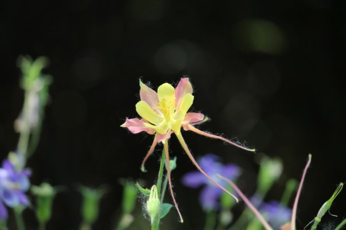 花舞--偶遇漏斗花