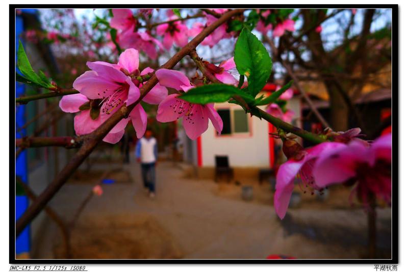 春到庭院香