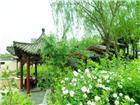 庭院之梦在花丛中