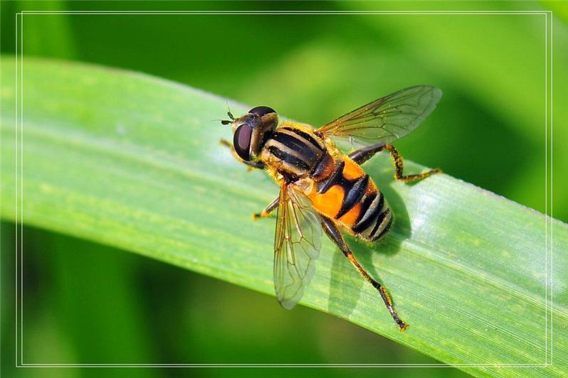 歇息的蜜蜂