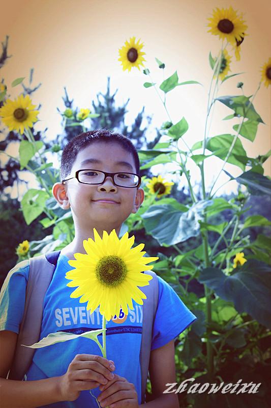 向日葵少年