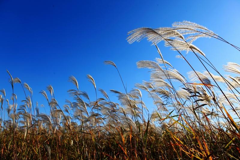 壁纸 草 成片种植 风景 绿色 植物 种植基地 桌面 800_533