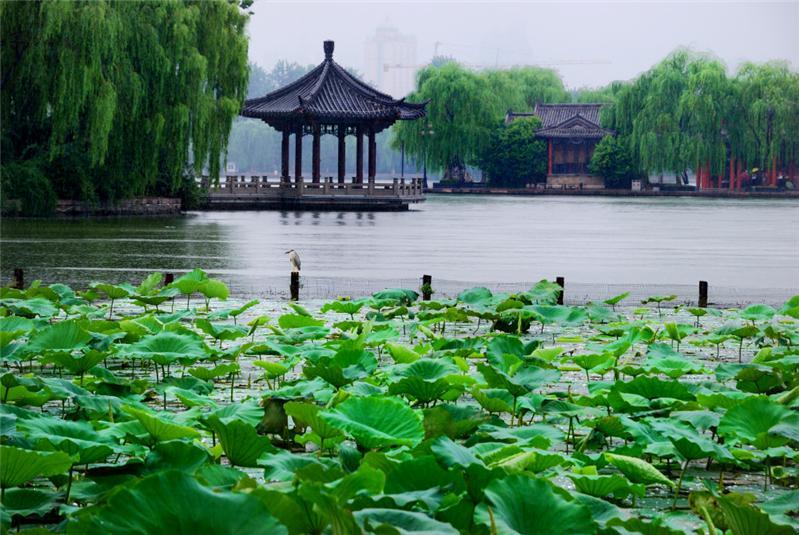清明时节雨纷纷,济南大明湖畔风景美!