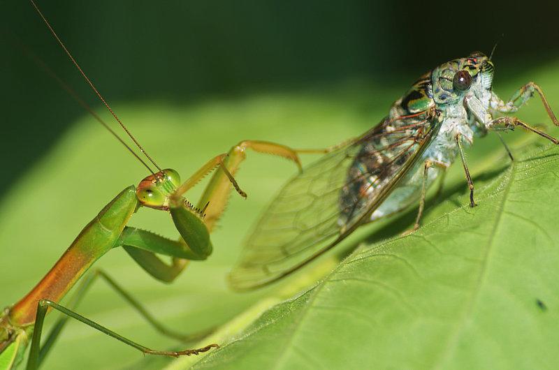 螳螂扑蝉黄雀在后 - 孟舸 - 孟舸的博客