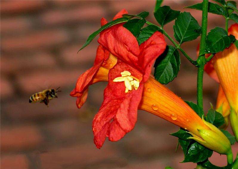 蜂花园 矢量图