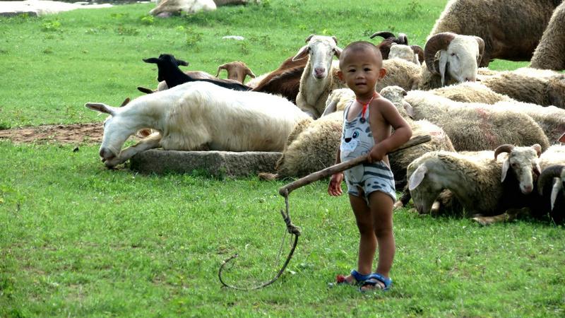 可爱的小羊倌
