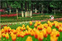 多彩花季(济南植物园)