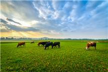 草肥牛壮好家园