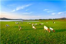 生态沂蒙赛草原