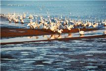 欢歌天鹅湖