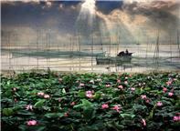 鸟语荷香微山湖
