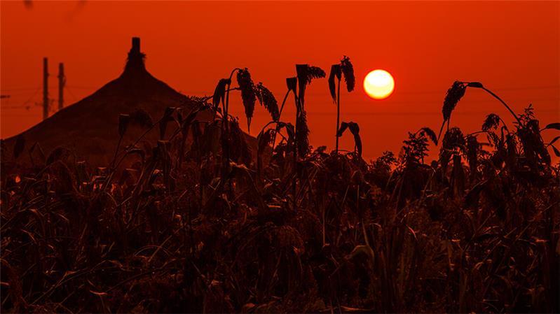 红高粱影视垹g,_作品简介:                           拍摄于高密红高粱影视