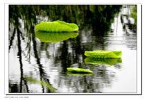 大湿地小风景