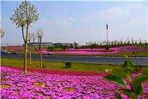 <b>春的颜色</b>
