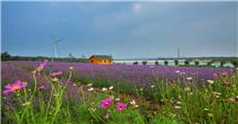 青龙湖香草园