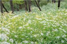 山中的野花也有春天