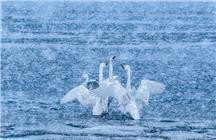 《风雪同舞》