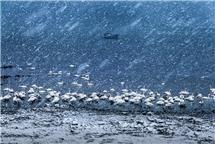 《雪舞天鹅湖》