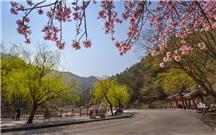 春到彩石溪