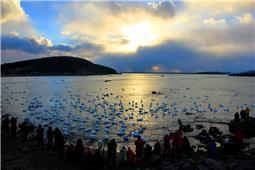 《天鹅湖的早晨》
