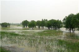 《河口湿地初春印象》