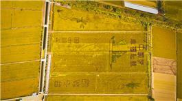 稻田画--中国梦幸福起航