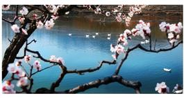 《春暖鸭先知》