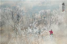 杏花开满山坡