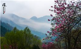 云端上盛开的花朵