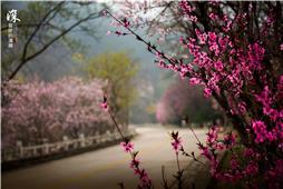 人间最美四月天 莫如泰山万花开