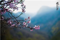 桃花玉蕊含情