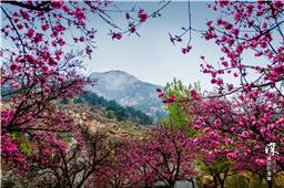 最美泰山桃花峪