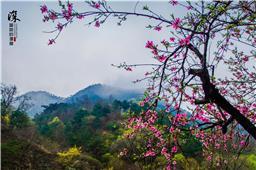一枝桃花是春意 万紫千红群山绘