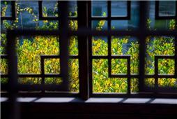 窗外的春色
