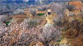 樱桃花开的季节