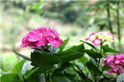 六月盛开的花