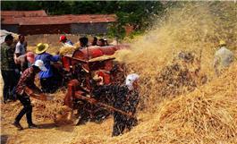 繁忙的麦场