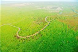 《黄河口新生湿地》