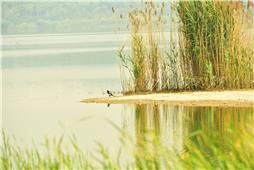 大自然的和谐之美