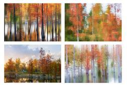 奇幻森林  秋与冬
